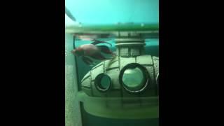 Betta fish tank divided (mario theme) pt.2