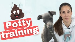 How to POTTY TRAIN Your Italian Greyhound Puppy  5 Useful TIPS
