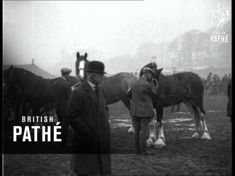 Equine Heavyweight Aristocrats (1930)