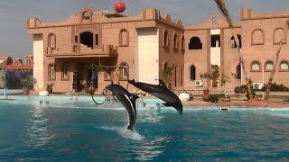 Дельфинарий в Шарм-Эль-Шейхе| Видео-шоу дельфинов в Египте| май 2013 года(Отдыхали в Египте в Шарм Эль Шейхе в мае 2013 года. Взяли экскурсию в дельфинарий. Шоу дельфинов посмотрели..., 2016-09-12T14:15:46.000Z)