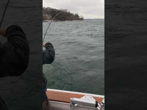 Landing a very nice Brown Trout on Lake Ontario