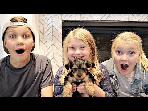 SURPRISING Our Kids With a PUPPY!!