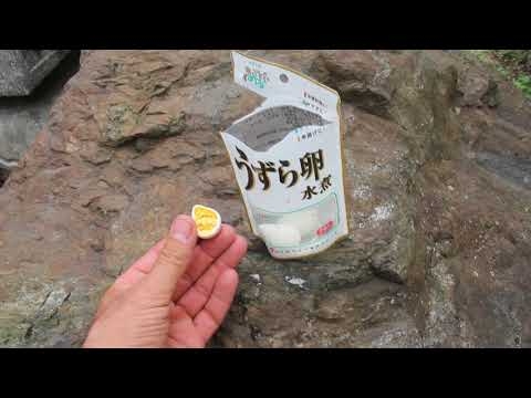 Eating Quail Eggs In Japan
