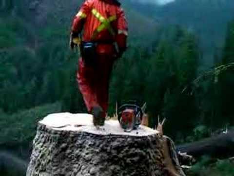 Zrezanie veľkého stromu