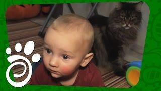 Дети, Кошки И Собаки. Все О Домашних Животных
