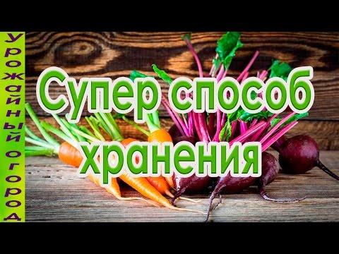 Как хранить морковь на балконе