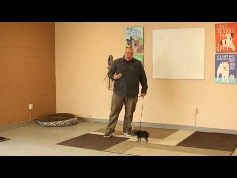 TYD60 Moment- How to Train a Little Dog With an E-Collar (Electric Collar) Ty the Dog Guy