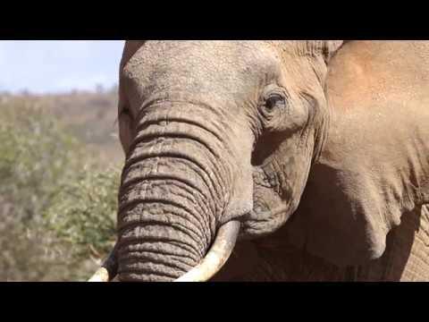 Loisaba Conservancy - Laikipia  - Kenya