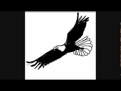 Dibujar águilas - Dibujos para Pintar - YouTube