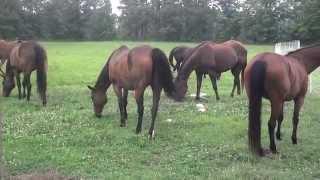 New Electric Fence Up Split Goat Pasture