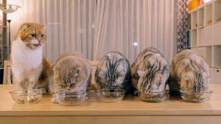 4그릇을 먹는 대식냥은 누구?