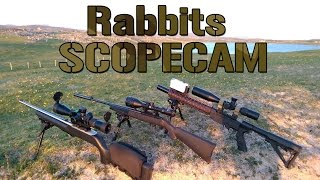 Rabbit Hunting Scopecam. Ruger 10/22