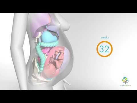 Смещение внутренних органов во время беременности / Murz Murzovi4