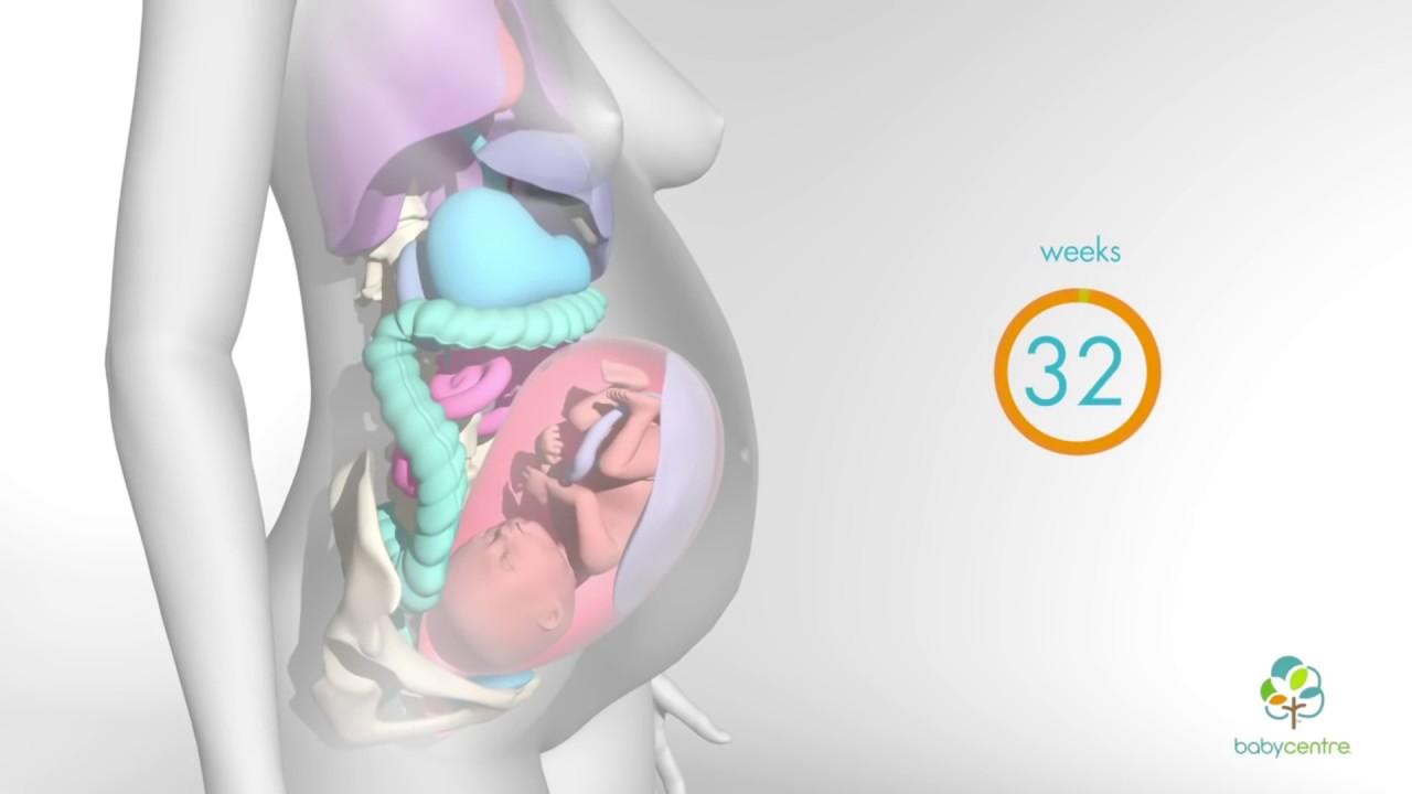Внутренние органы беременной картинка