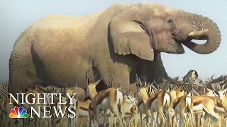 'Planet Earth 2' Aims To Take Audiences To 'Every Corner Of The Globe' | NBC Nightly News