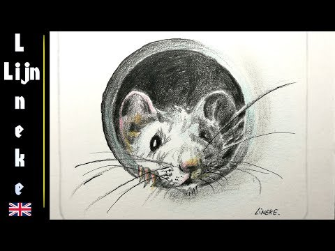 how-to-draw-a-cute-mouse-in-color-pencil-for-beginners
