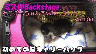 【子猫 保護10d】ゆめちゃん、猫キャリーバックに初めて入ってみた【cute Kitten 10d】