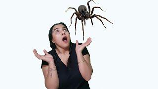 Örümceklerden Kaçıyor لعنكبوت لدغ شفا !!!