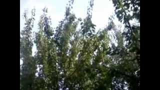 Repeat youtube video Usluzna rezidba voca-rezidba kajsije