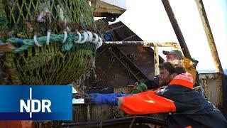Fischfang auf der Hochsee: Was treibt Männer in die Fischerei? | 7 Tage | NDR