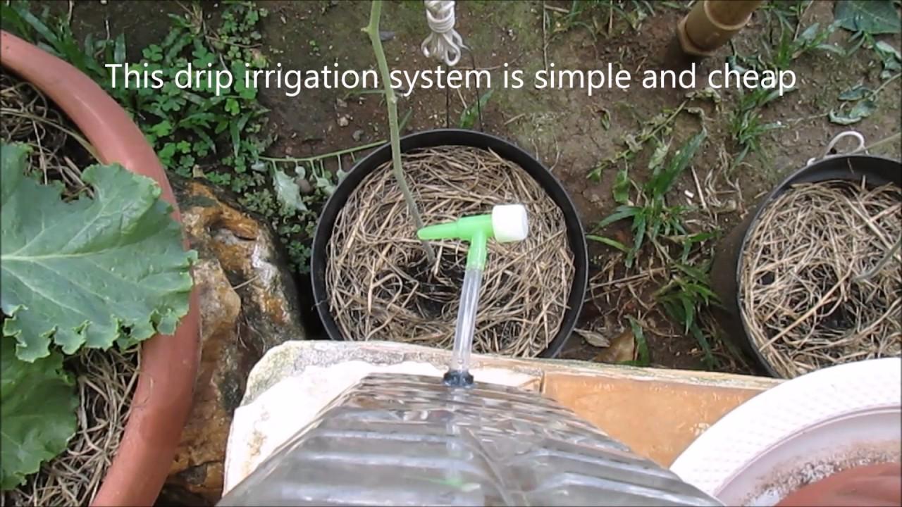 Build Pvc Garden Watering System Gardening Flower And
