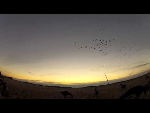 Saskatchewan Waterfowl Crush