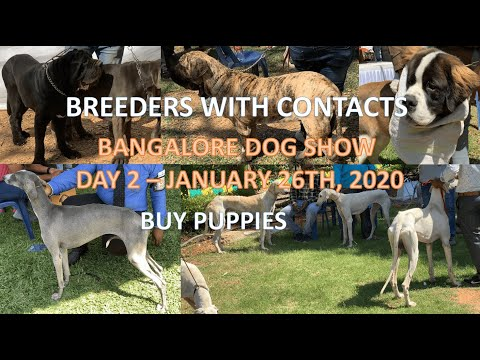 Bangalore dog show day 2 26th January 2020  BREEDERS WITH CONTACTS BUY PUPPIES DOG MARKET