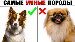 5 Самых Быстрообучаемых Пород Собак в Мире
