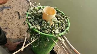 Unique Fish Trapping System, New Technique of Catching Country Fish with Basket