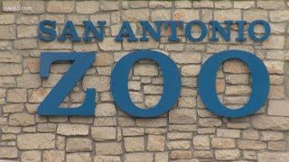 San Antonio Zoo weighing options to keep drive-thru experience as traditional reopening looms