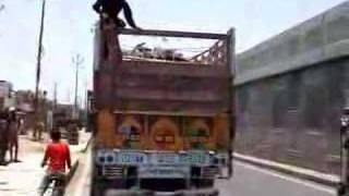 STOP CRUEL ANIMAL TRANSPORTATION - OIPA INDIA