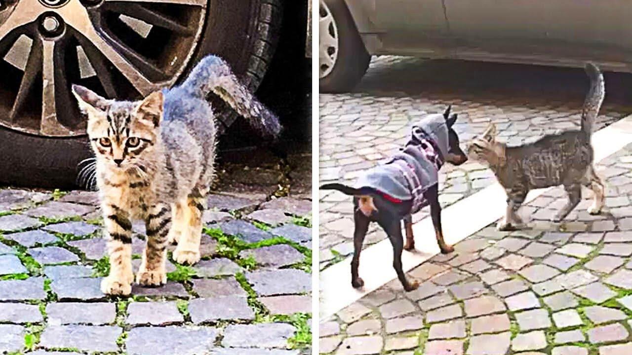 Download Streunende Katze bittet fremden Hund um Hilfe...