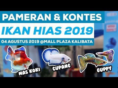 PAMERAN DAN KONTES IKAN HIAS 2019   MALL PLAZA KALIBATA   4 AGUSTUS 2019
