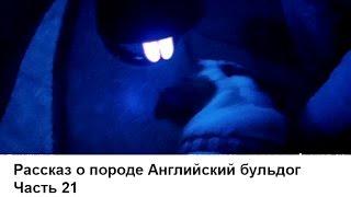 видео болезни английских бульдогов