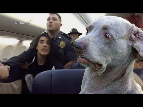 Woman Claims She's Deathly Allergic to Pets on Plane 樂