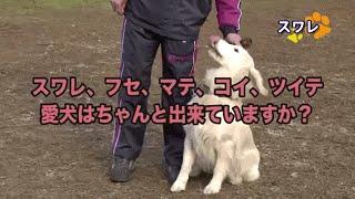 実は犬のしつけだけではない「聴導犬」の第一人者 藤井聡 犬しつけ日本...
