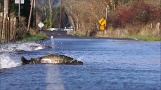 Fish Swimming In Flood - 977071 thumbnail