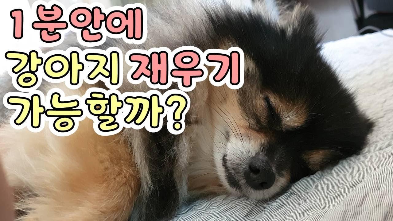 [ENG SUB] 어머, 이렇게나 빨리?? 딥슬립 하는 강아지 A dog in deep sleep in seconds l 또리티비DDoriTV