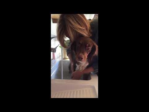 Lavar a tu perro con aceites esenciales