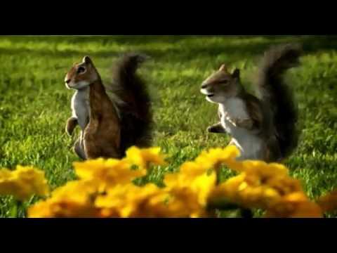 Kit Kat Dancing Squirrels AD