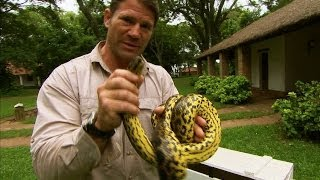 Eye to eye with a yellow anaconda - Deadly 60 - Series 2 - BBC