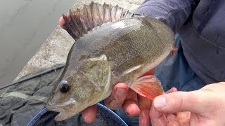 Perch Fishing Rigs, Tips & Tactics