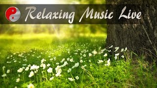 Relaxing Instrumental Background Music Live Stream For Relaxation, Sleep, Studying And Concentration