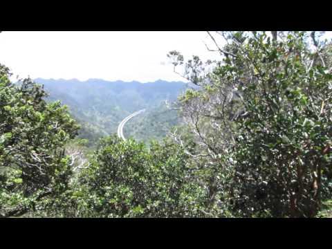 Aiea Loop Trail 5 (Keaiwa Heiau State Recreation Area) 05/01/2014