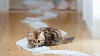 прикольное видео смешные коты расправляются с бумагой!