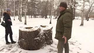 В Суворовском парке исчезают деревья