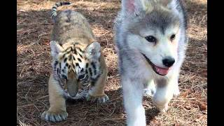 Animal Pictures | Cute Puppies & Kittens - Funny Baby Animal Photos