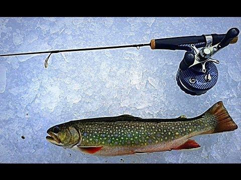 Creek Fly Fishing Missouri River Headwaters Sw Montan