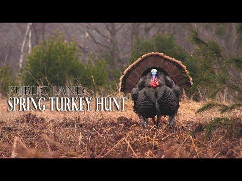 Spring Turkey Hunt   Calling In A Silent Bird   Michigan Turkey Hunt