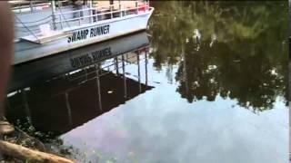 Alligators dans le bayou sud de Louisiane